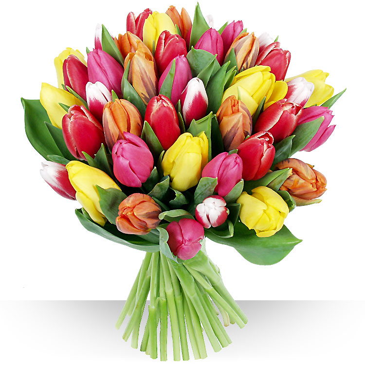 Collection printemps 30 tulipes for Bouquet de tulipes