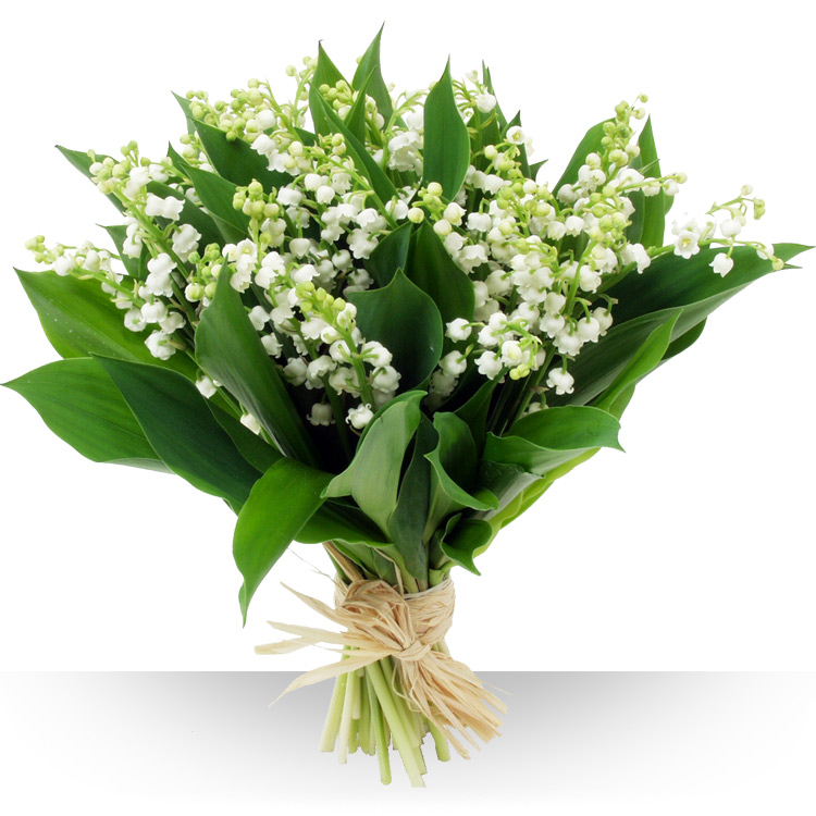 1er mai 50 brins de muguet - Bouquet de muguet photo ...