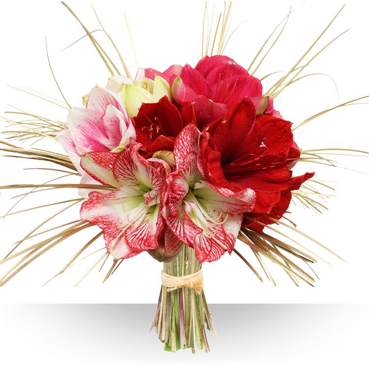 Bouquets de fleurs rouges for Amaryllis en bouquet