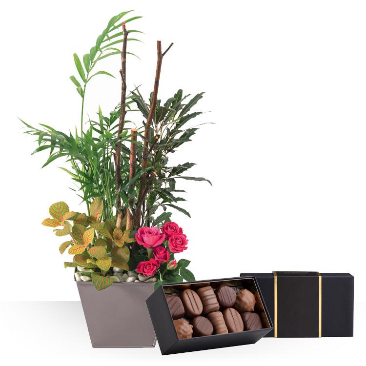 livraison express audace et ses chocolat. Black Bedroom Furniture Sets. Home Design Ideas