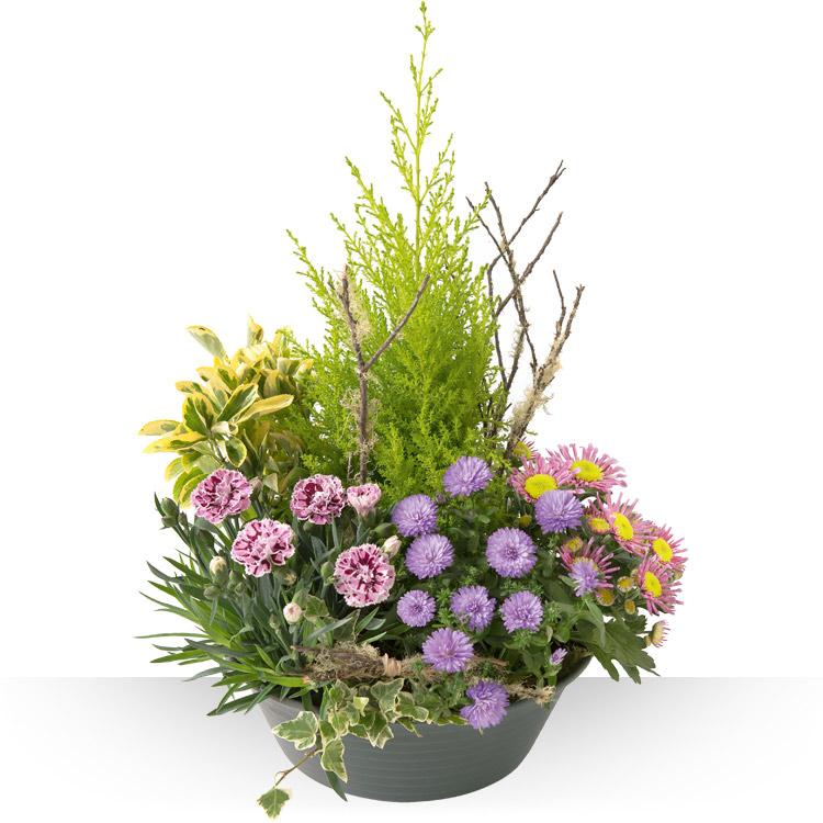 Deuil coupe de plantes for Jardin de fleurs a couper