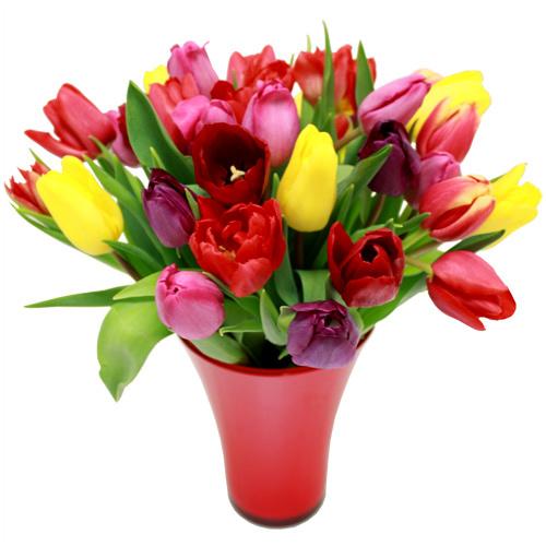 vite des fleurs !: le temps des tulipes !
