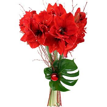 Amaryllis rouge pour pinprenelle le blog de la rubrique for Amaryllis pour noel