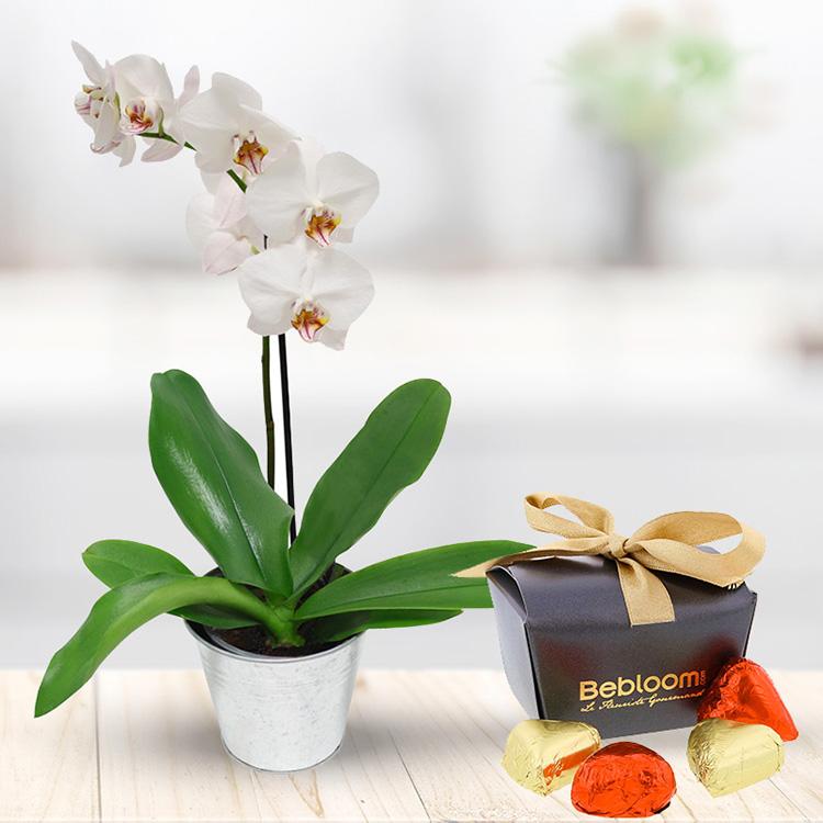 Fleuriste livraison de fleurs et cadeaux for Fleurs et cadeaux