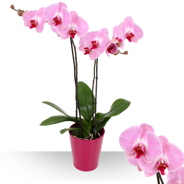 Page produit boutique fleur carrefour online for Plante appartement