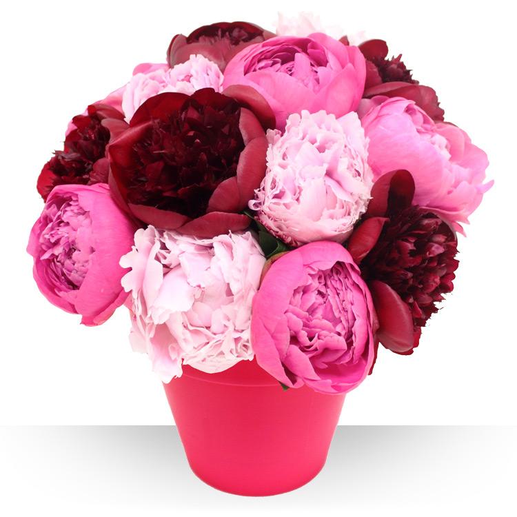 Spcial printemps pivoines et son vase for Fleurs et cadeaux