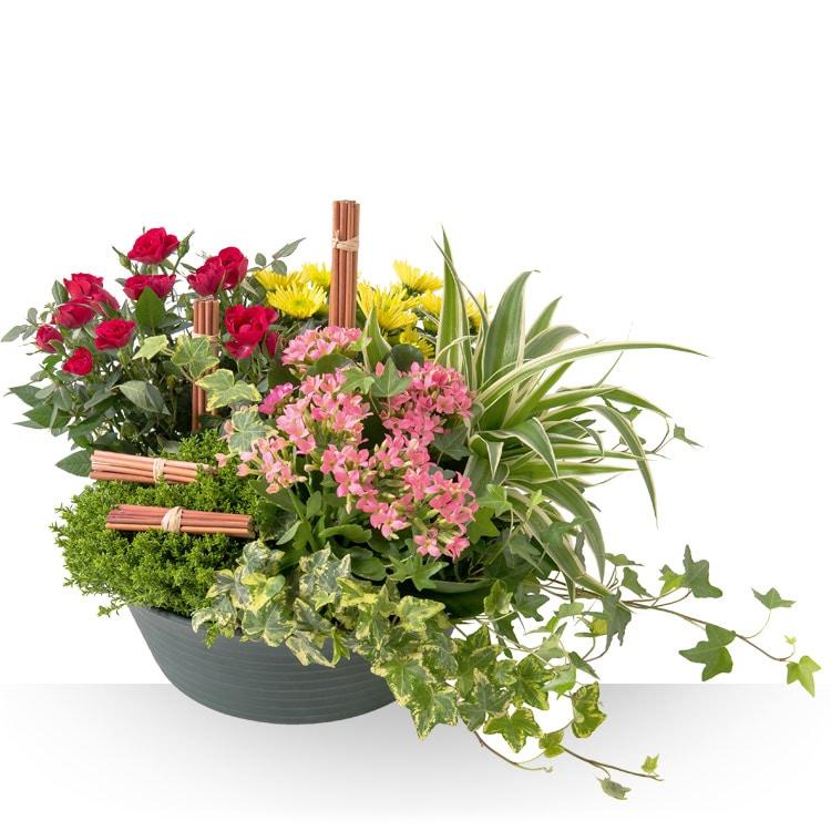 recherche de guides des plantes vivaces. Black Bedroom Furniture Sets. Home Design Ideas