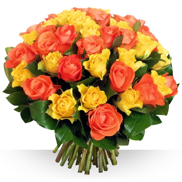 Félicitations - 50 ROSES SAFRAN -