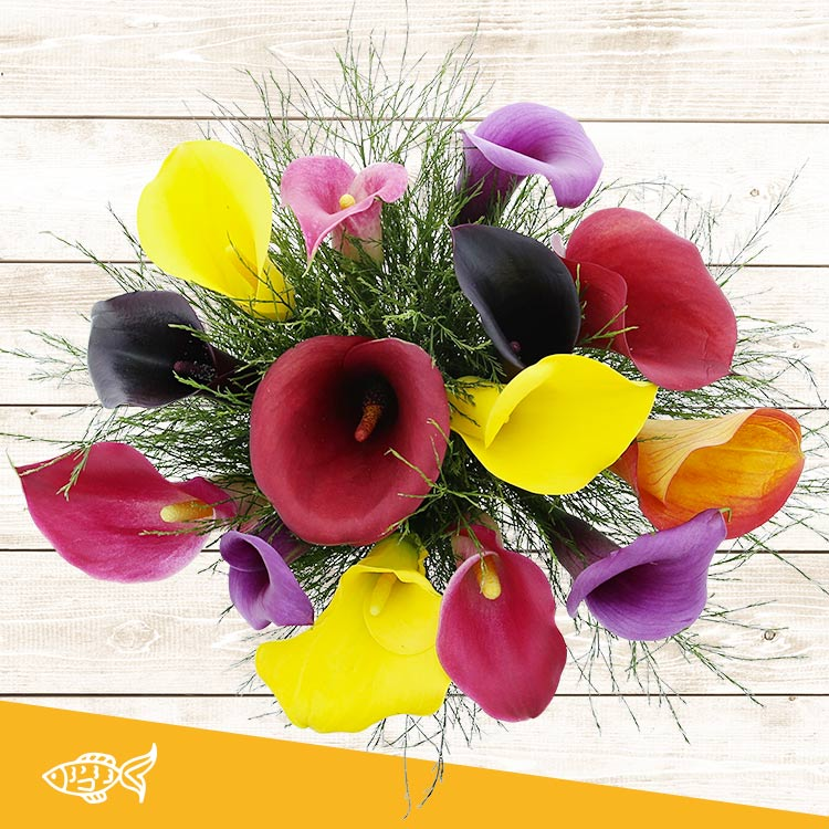 Anniversaire - BOUQUET DE CALLAS MULTICOLORES -