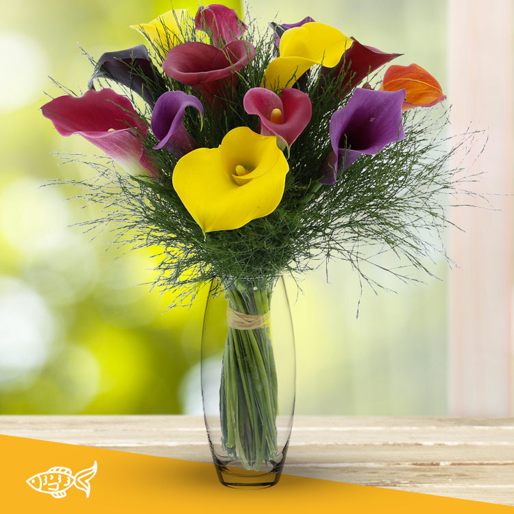 Anniversaire - BOUQUET DE CALLAS MULTICOLORES XL ET SON VASE -
