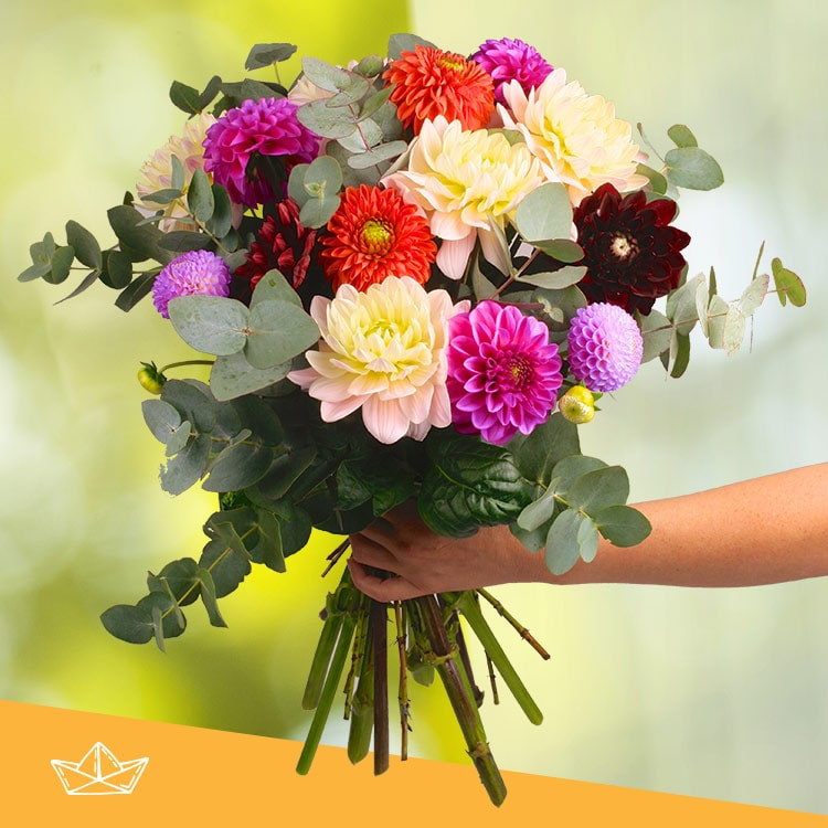 Collection Automne - BOUQUET DE DAHLIAS MULTICOLORES XXL -