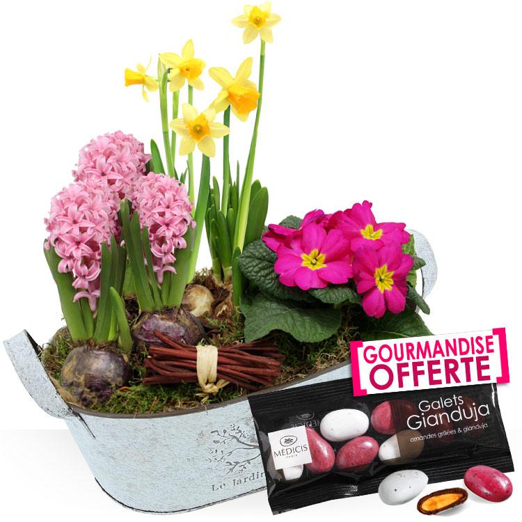 Collection Hiver - COUPE DE PLANTES -