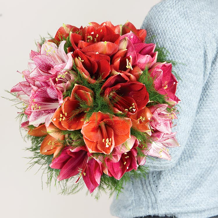 Collection Hiver - AMARYLLIS CHERRY -