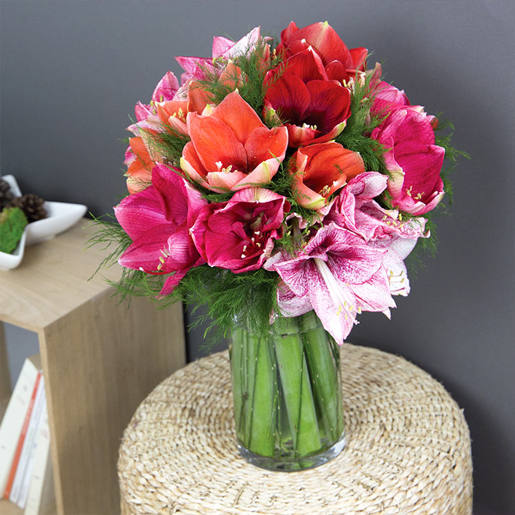 Collection Hiver - AMARYLLIS CHERRY XXL ET SON VASE -