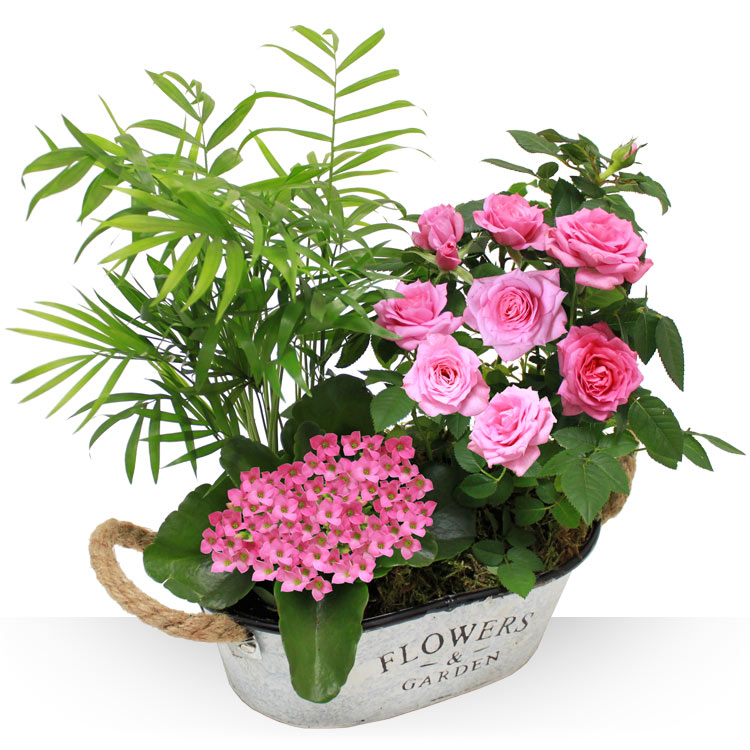 Collection Hiver - JARDIN D'AMOUR -