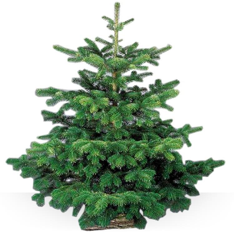<b>Sapin de Noël</b> - SAPIN 2M - 2M25 -