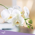02-orchidee-sur-support-3971.jpg