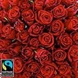 101-roses-rouges-5298.jpg