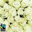 40-roses-blanches-et-son-vase-5315.jpg