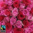 50-roses-en-camaieu-rose-5340.jpg