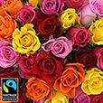 50-roses-multicolores-vase-5335.jpg