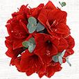 Collection Hiver - BOUQUET D'AMARYLLIS ROUGE -