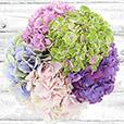 bouquet-d-hortensias-2574.jpg