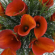 bouquet-de-callas-orange-xl-et-son-v-3134.jpg