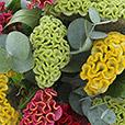 bouquet-de-celosies-varies-2545.jpg
