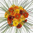 bouquet-de-germinis-tons-chauds-et-s-2751.jpg