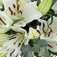 bouquet-de-lys-blancs-4194.jpg