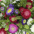 bouquet-de-reine-marguerites-multico-2536.jpg