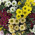bouquet-de-santini-multicolores-2530.jpg