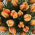 bouquet-de-tulipes-princesse-irene-3467.jpg