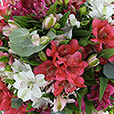 brassee-d-alstromerias-rose-pastel-2488.jpg