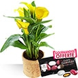 Collection Printemps - CALLA -