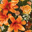 estime-orange-1587.jpg