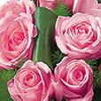 hommage-rose-1575.jpg