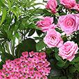 jardin-d-amour-1092.jpg