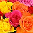 pack-beaujolais-rose-vase-fizzy-1695.jpg