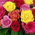 rosas-50-itf-1013.jpg
