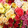 rose-explosion-4605.jpg