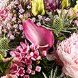 sweety-pink-4593.jpg