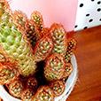 trio-de-cactus-7203.jpg