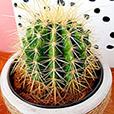 trio-de-cactus-7204.jpg