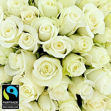 50-roses-blanches-vase-5317.jpg