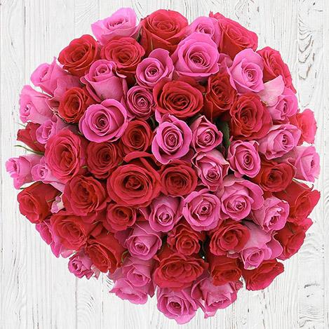 50-roses-en-camaieu-rose-6767.jpg