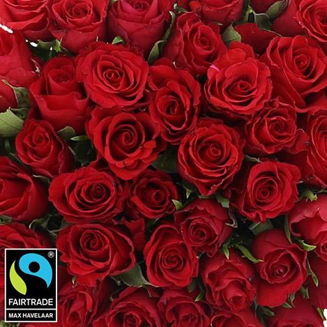 50-roses-rouges-vase-5302.jpg