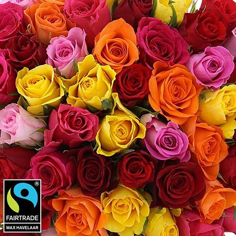 60-roses-multicolores-5328.jpg