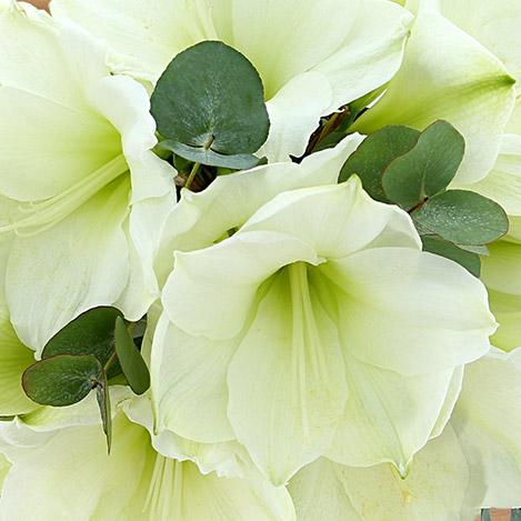 bouquet-d'amaryllis-blanc-3431.jpg